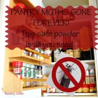 How I Finally Got Rid of Pantry Moths!