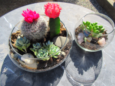 succulent succulents DIY terrarium sustainable daisy