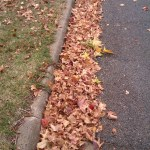 Autumn leaves in street gutter April 2013
