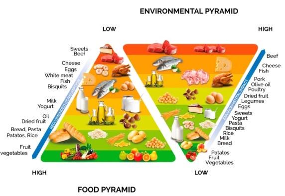 doppia-piramide-adulti_en-2