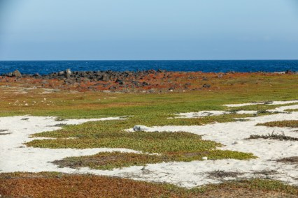 Colorful Landscape on Mosquera Island