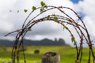 Kauai farm land