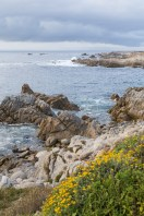 Monterey coastal scenery