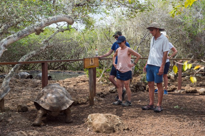 Tortoise breeding center on San Cristobal Island Ecuador