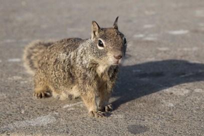 Inspector Squirrel