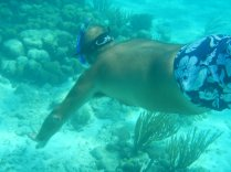 Snorkeling in Virgin Gorda