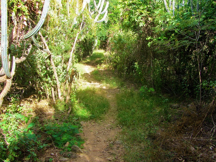 Blog - Yawzi Trail 2
