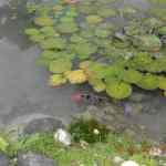 Turtle River Park Fish