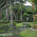 Turtle River Park Scenic View