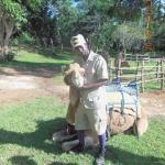 Prospect Plantation - Camel and trainer