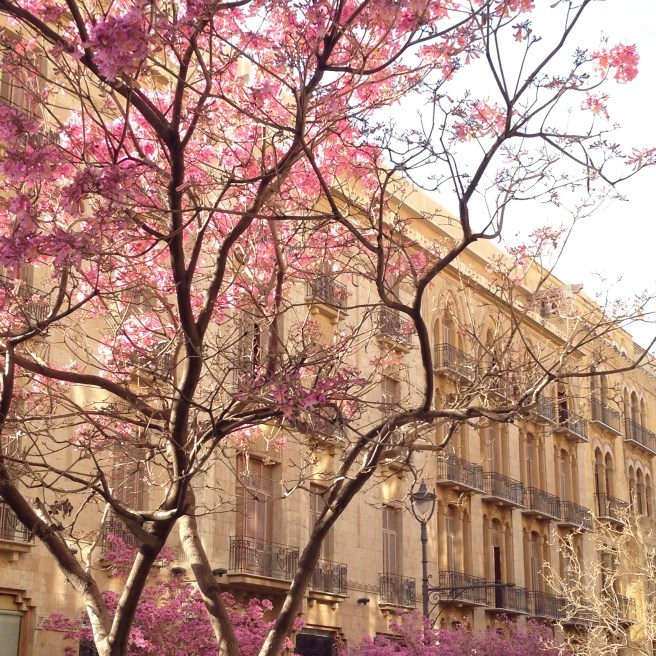Pink flowered trees in Beirut Souks