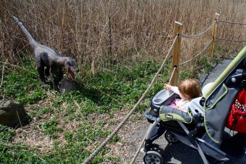 hand feeding velociraptors