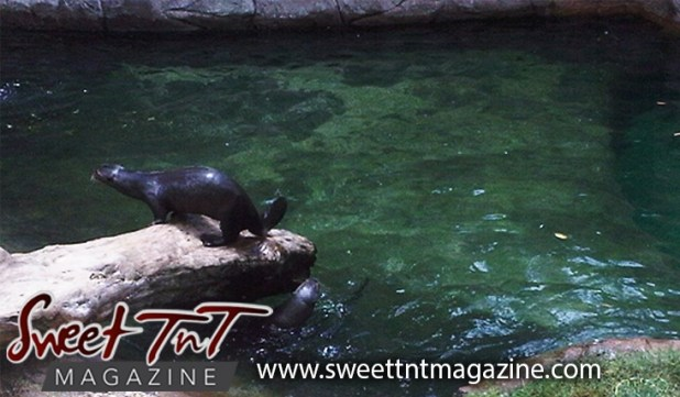 Otter at home