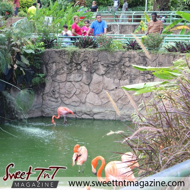 Zoo flamingoes1