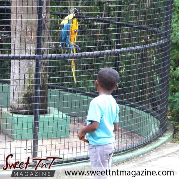 zoo macaw4