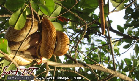 snake-in-the-tree