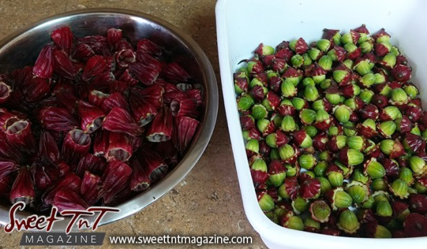Sorrel or roselle red fruit peeled with seeds for planting for Christmas season or health benefits for cholesterol, blood pressure, bladder infections, constipation, maylase, use recipe for good taste and health benefits in in Sweet T&T, Sweet TnT, Trinidad and Tobago, Trini, vacation, travel