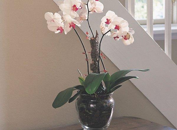 featuredimage-orchids