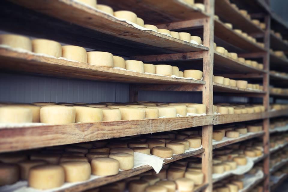 Queijo da Serra na nossa queijaria em Seia - Serra da Estrela