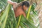 coconut leo