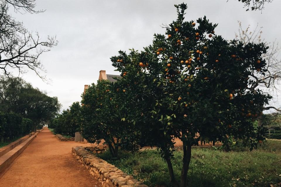 Babylonstoren Orchard