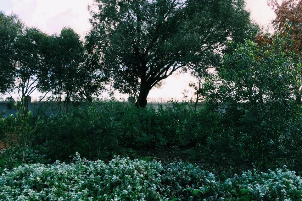 Babylonstoren garden