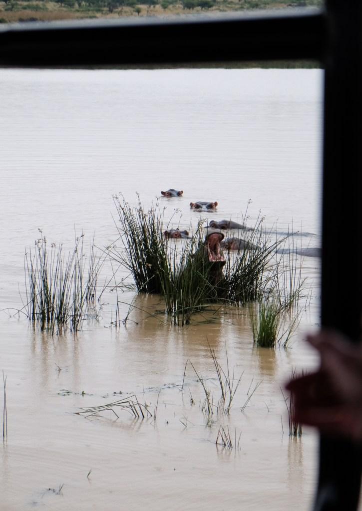 hippo durban safari
