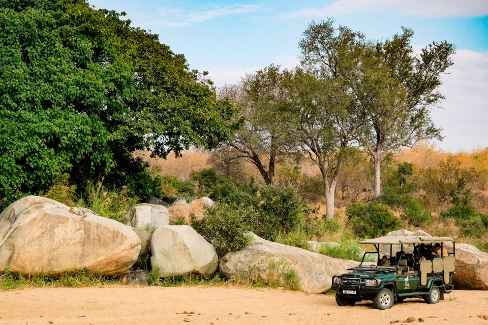 leopard jock safari