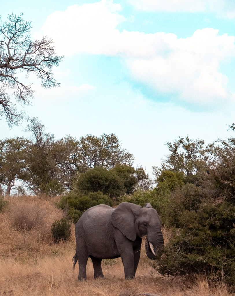 things to know before you visit the kruger park