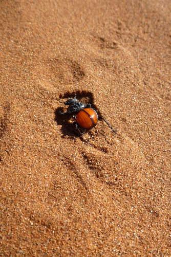 ナミビアナミブ砂漠2 (22)