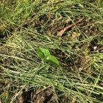 2016年は畑を耕さずに野菜を育ててみることにした。無農薬の不耕起栽培! (1)