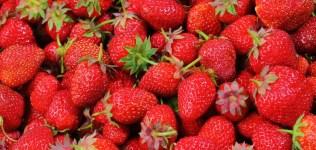 strawberries-berries-fruit-freshness-46174