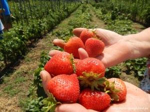 Bio Grădinile Rosenthal