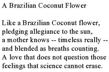 A Brazilian Coconut Flower