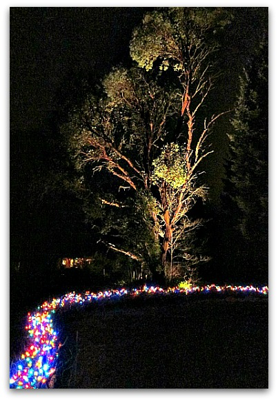 sm frame Christmas lights tree fence 011