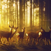 Deer group