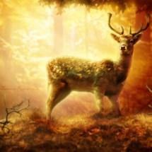 forest deer 3