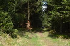 wandern-Tambach-dietharz-Fruehling