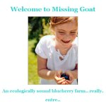 Site Launch: Missing Goat