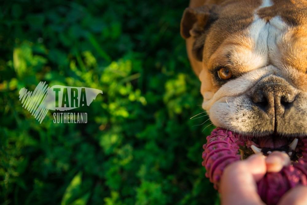tarasutherland-pink-consideringvision