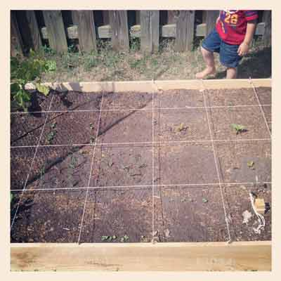 Raised bed of everything else