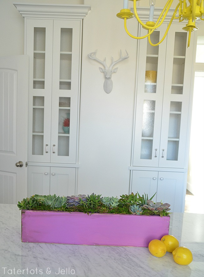 diy succulent planter at tatertots and jello