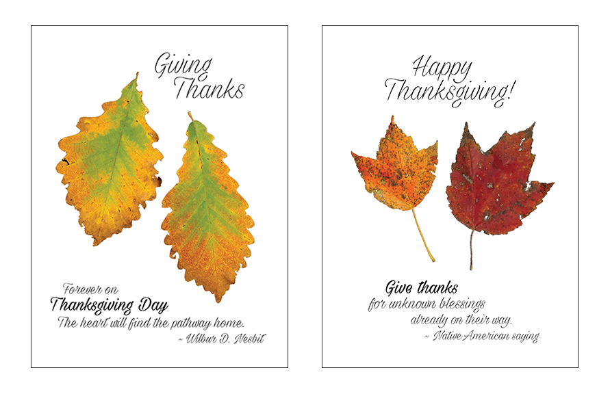 Thanksgiving Leaf Card Fronts