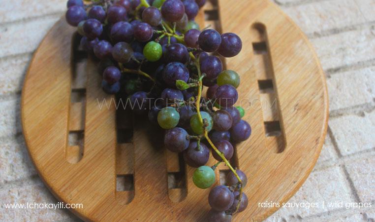 wild-grapes-haiti-raisins-sauvages