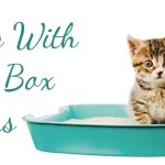 Dealing With Pet & Litterbox Odours