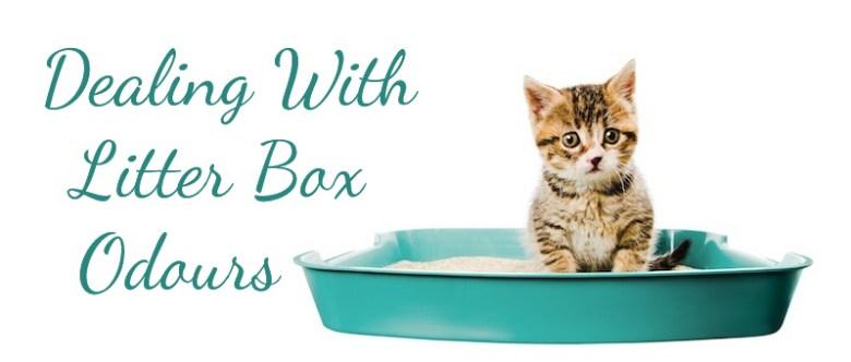 litter-box-odours