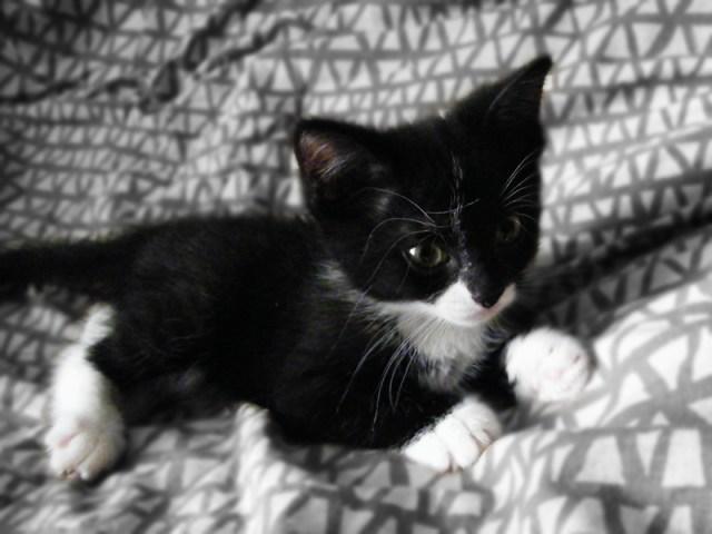 Jasmine Jazzy the Kitten First Morning
