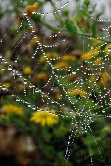 Web After Rain