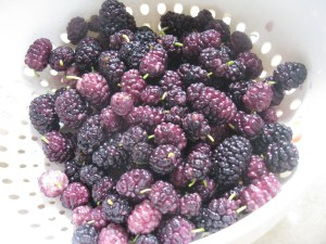 Fizzy 'Prosecco' Mulberry Gelee