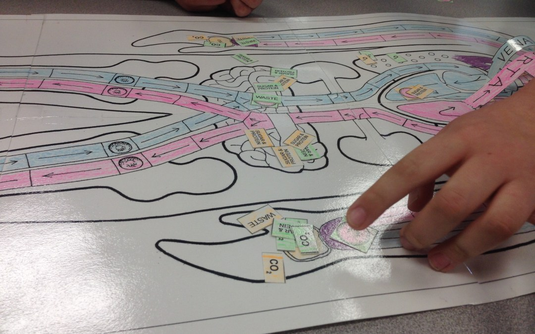 STEM Lesson – The Circulatory System Game